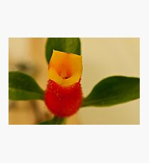 Candy Corn Flower Macro Photographic Print