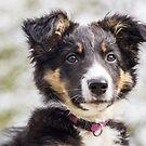 Puppy by Karen Havenaar