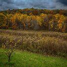 Addison Grove by Adam Northam