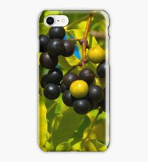Amur cork tree iPhone Case/Skin