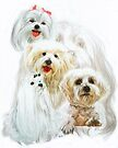 Maltese /Ghost by BarbBarcikKeith