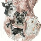 Miniature Schnauzer/Ghost by BarbBarcikKeith