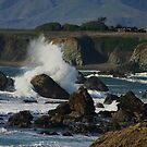 Sonoma Coastline by Barbara  Brown