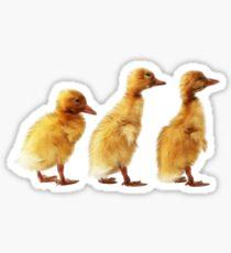 Yellow Baby Ducks Sticker