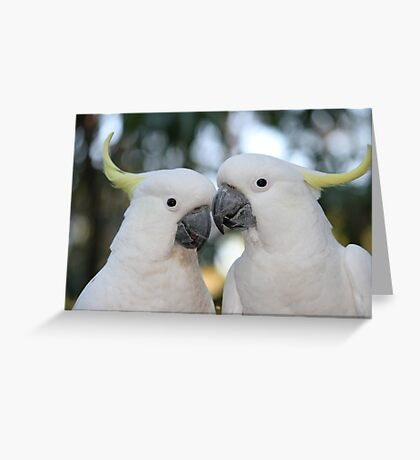 Sulphur-crested Cockatoos Greeting Card
