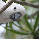 Birds of Tallebudgera Valley by Robyn J. Blackford by aussiebushstick