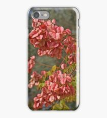 Tree in my Area... Bloom Before & in Autumn  iPhone Case/Skin