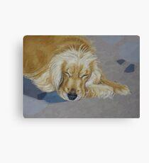 Sleeping Pet Canvas Print