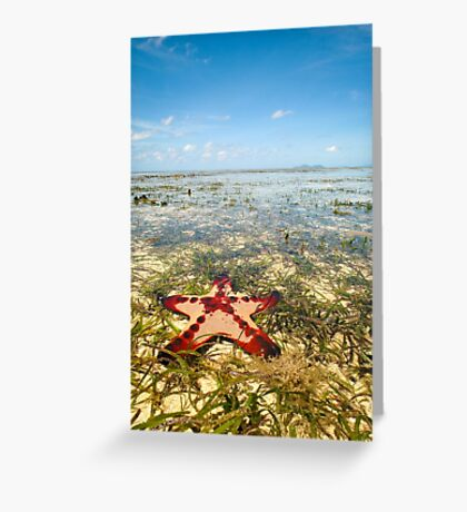 Horned Sea Star Greeting Card