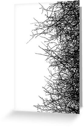 Dry bush by Richard Laschon
