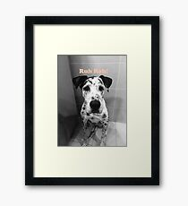 Ruh Roh! - Great Dane Framed Print