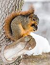 Snowy Squirrel by Kenneth Keifer