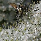 Wasp on onion flower by BigAndRed
