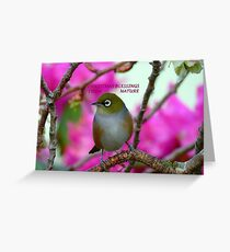 Christmas Blessings From Nature- Silvereye - NZ - Christmas card  Greeting Card