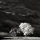 the Ash Tree (Buttermere) by marshall calvert  IPA