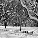 Central Park, NYC Blizzard by Alberto  DeJesus
