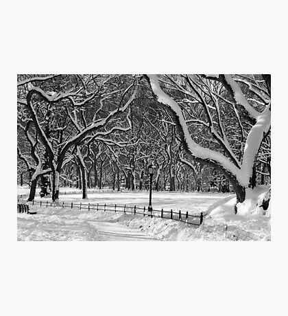 Central Park, NYC Blizzard Photographic Print