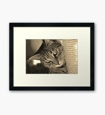 Cheeky kitty cat Framed Print