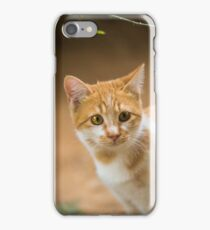 Curious orange tabby cat. iPhone Case/Skin