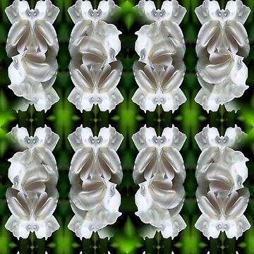 White Rose Abstract Nature Art by SmilinEyes