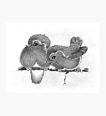 Feathered Friends Photographic Print