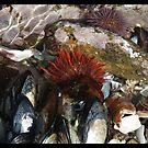 Urchins and Mussels by Shaun Swanepoel