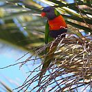 Australian Rosella High Up In A Palm Tree by Ronald Rockman
