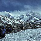 yaks on the way to Shishapangma, Tibet by Istvan Hernadi