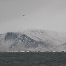 Gull over Mountain in Reykjavik Iceland by KR Green