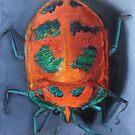 Shield Beetle by Glenda Jones