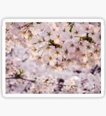 Aomori Sakura Sticker