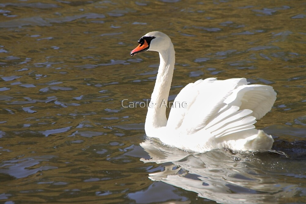 Peace and Gentleness by Carole-Anne