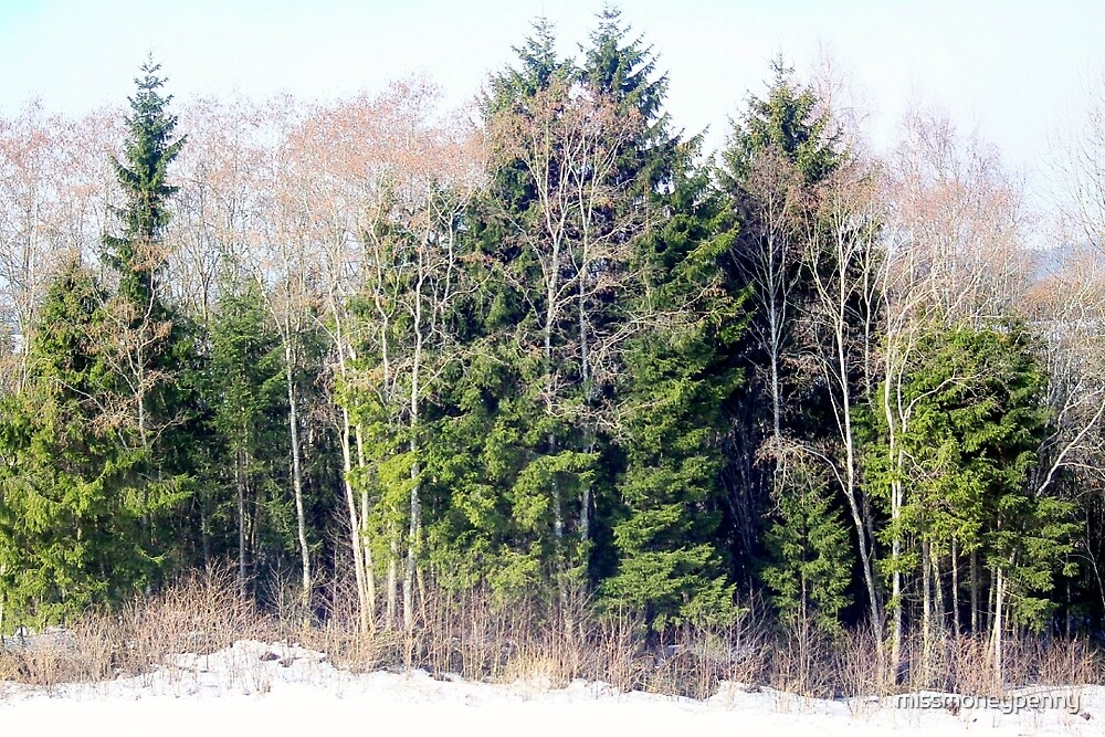 Evergreen and Deciduous by missmoneypenny