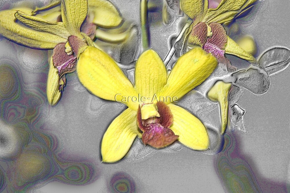 Oil Slicked Orchids by Carole-Anne