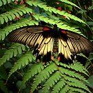 Butterfly and Fern by ienemien