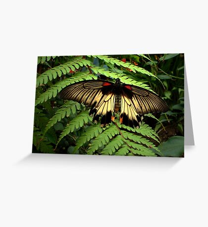 Butterfly and Fern Greeting Card