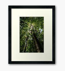 Rainforest Giants Framed Print