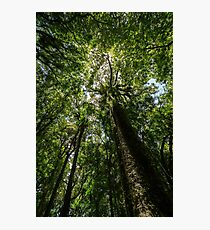 Rainforest Giants Photographic Print