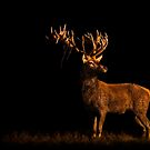 Last Light Red Deer by George Wheelhouse