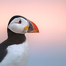 Puffin Sunset Profile by George Wheelhouse