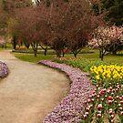 Tulip Festival by SusanAdey