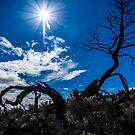 Spring Sun by Richard Bozarth