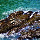 Party Rock/Oregon by Richard Bozarth