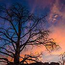 Tree of the Sunset/Smith Rock by Richard Bozarth