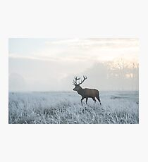 Monarch of Narnia Photographic Print