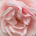Pink Dream by Christine  Wilson