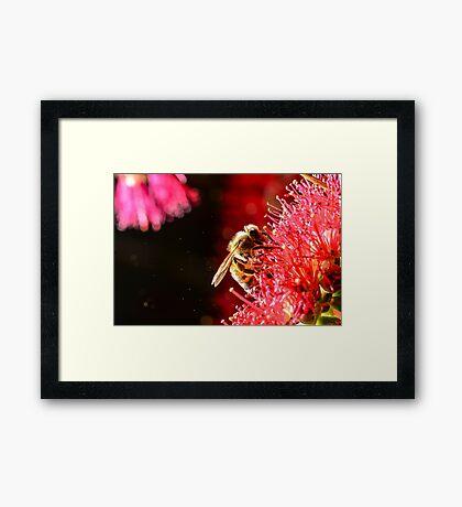 Bee at Rest Framed Print