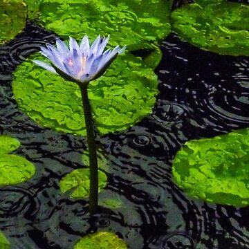 Rainy Waterlily by Langie