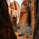 Arches National Monument by Heather Haderly