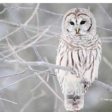 owlee by morolean